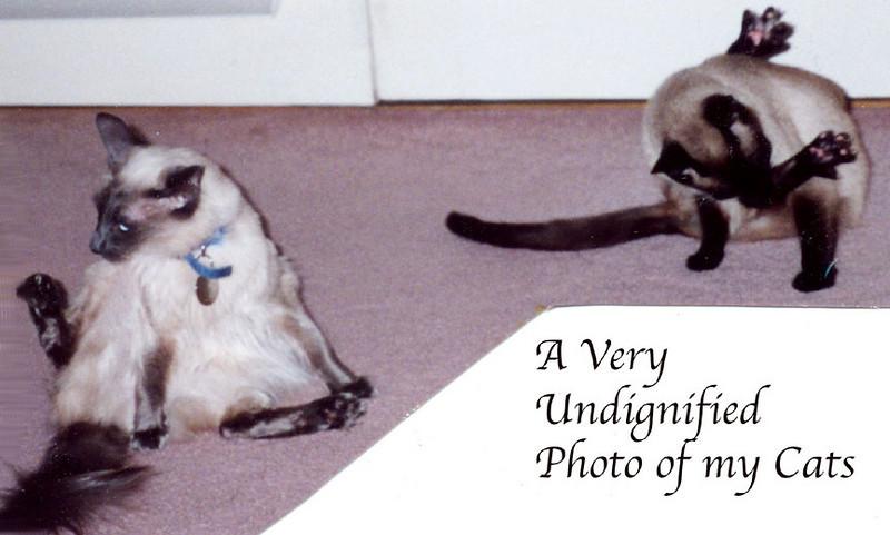 My Undignified Cats<br /> Taken: around 1999