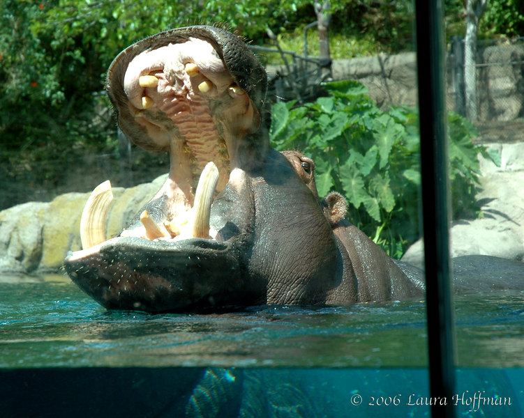 Hippo open