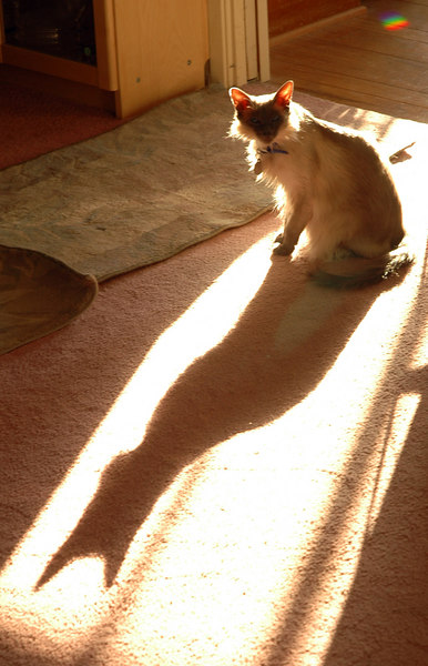Skye's Shadow