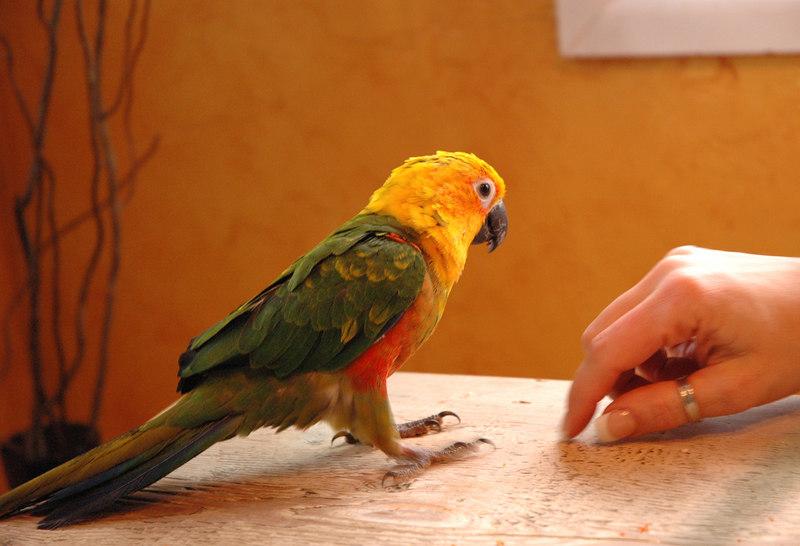 Alex the Bird