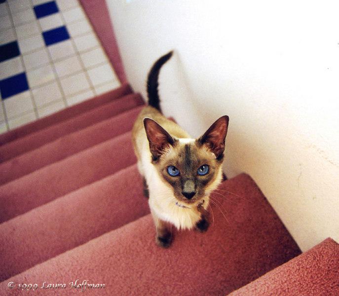 Skye kitty