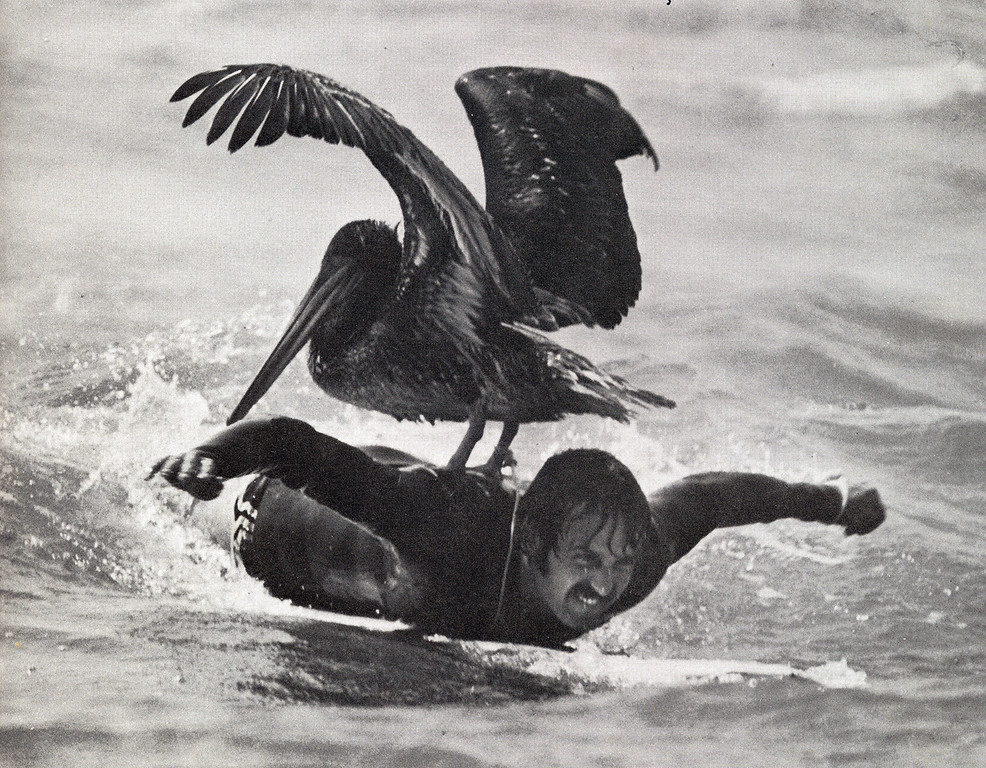 Joel Pasco and Rusty the Pelican<br /> Fly Away Free<br /> 1981