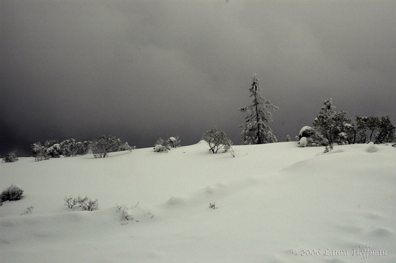 Shasta gloom, monochromatic scene of snow and pines