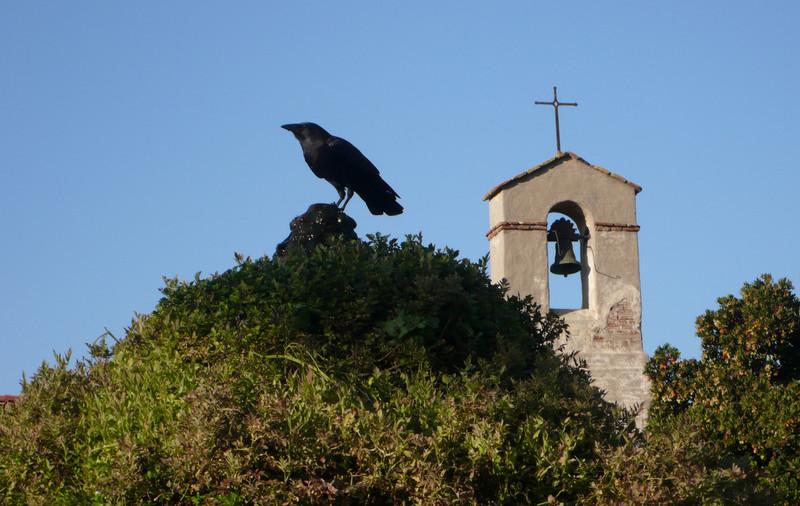 Black Bird<br /> Mission San Juan Capistrano