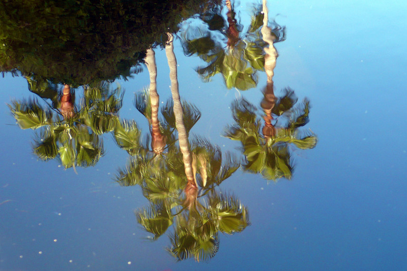Palm Trees from Fountain Eye View<br /> Mission San Juan Capistrano
