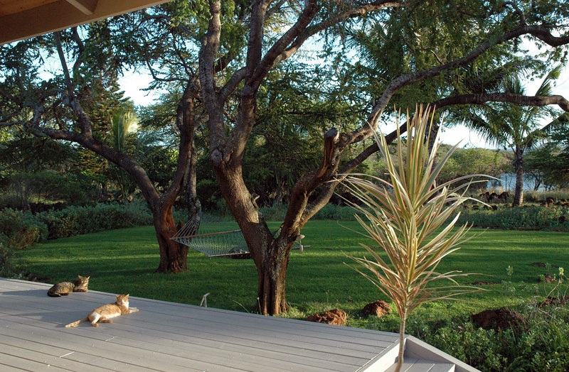 Looking out from the lanai with cats, Molokai Hawaii