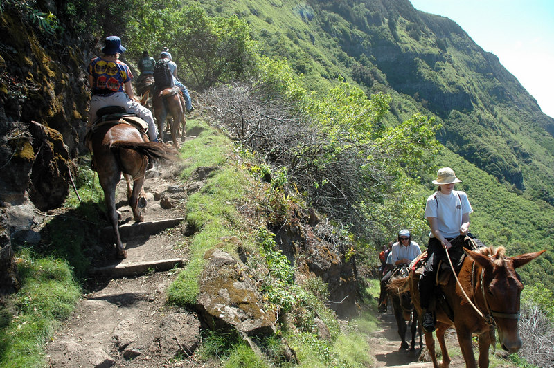Letting the Mules Pass, Kalaupapa Pali Trail, Molokai Hawaii