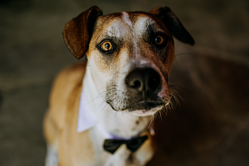 Who says dogs cant get dressed up at your wedding too?