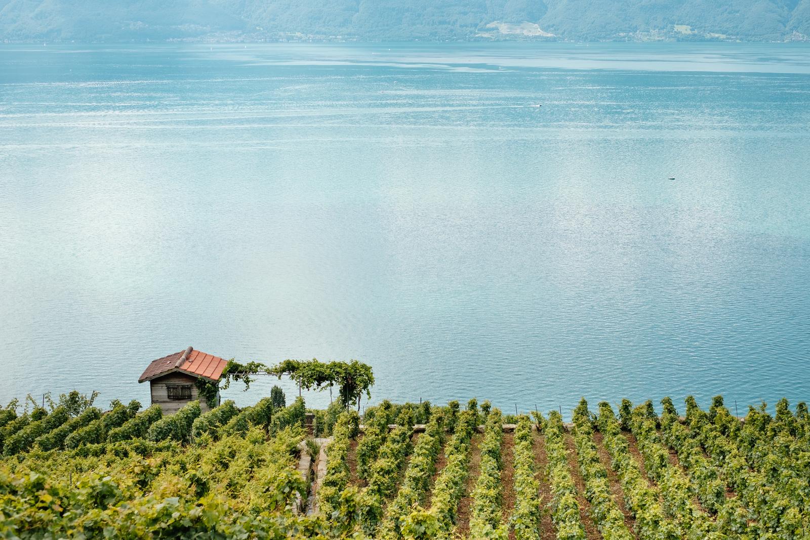 A vineyard in Lavaux