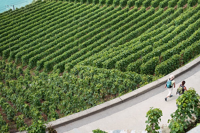 Two woman walking in Lavaux vineyards