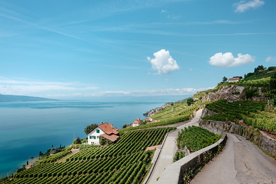 Looking at the Leman lake from Lavaux