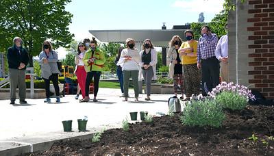 Lavender planting crew
