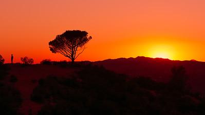 LA SKyline at sunset with Lone Tree