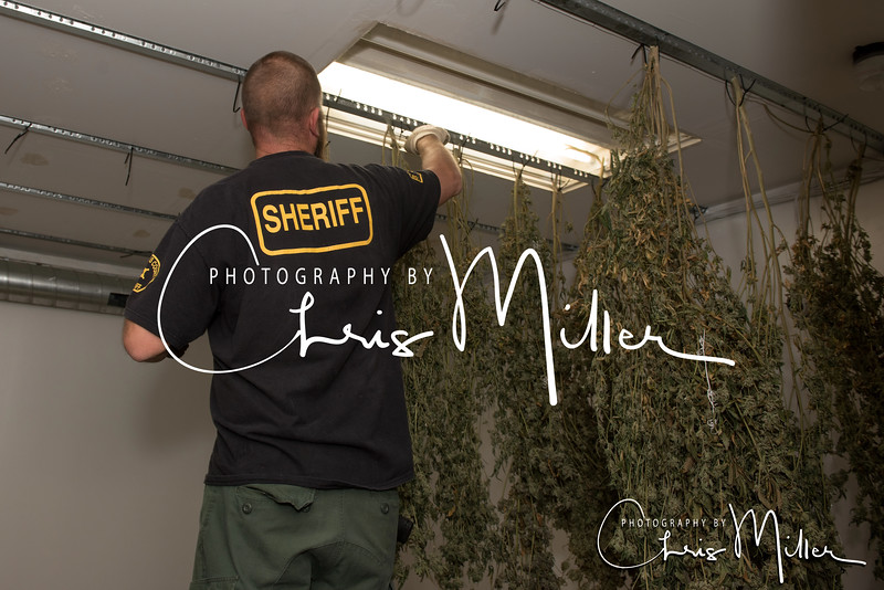 (1135) Illegal Marijuana Grow 10-19-16 Photography by Chris Miller