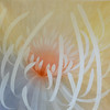 Efflorescence Peach-Lun Tse, 50x50 on canvas (16-6-13) JPG