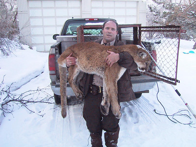 Conservation officer Scott White with a cougar captured in the Salt Lake Holladay area.  Photo by Utah Division of Wildlife Resources.