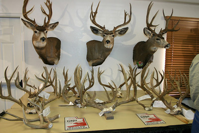 Four men are facing prison time and more than $60,000 in fines after allegedly poaching 18 deer in Juab County.  This photo of the poached deer was taken at a May 13, 2009 press conference at the Utah Division of Wildlife ResourceÕs Springville office.  Photo by Scott Root, Utah Division of Wildlife Resources.