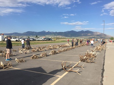 2016 antler and hide auction