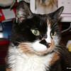 11 D0306 Kally Kitty Apr 21 2006