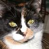 02 0892 Kally Kitty  July 16 2002
