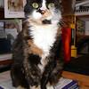13 D0309 Kally Kitty Apr 21 2006