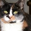 03 1199 Kally Kitty  Sept 25 2002