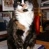 14 D0312 Kally Kitty Apr 21 2006