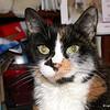 12 D0307 Kally Kitty Apr 21 2006