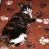 09 D0168 Kally Kitty Apr 6 2006