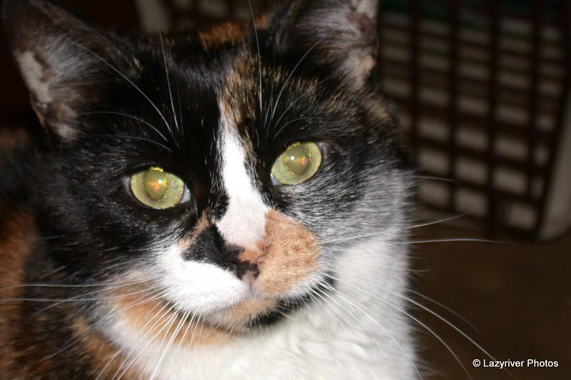 01 0891 Kally Kitty  July 16 2002
