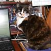 05 8434 Kally Kitty Nov 13 2005