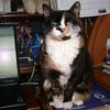 06 8436 Kally Kitty Nov 13 2005
