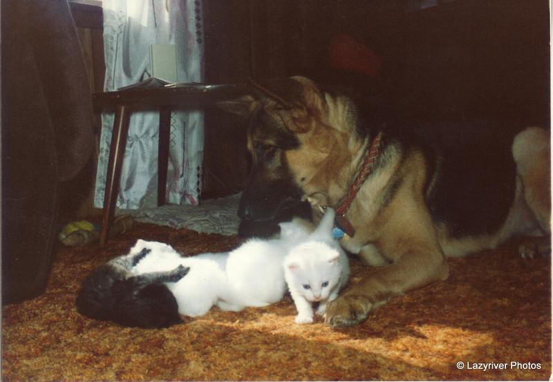 01 Scout Kittens Sept 1981
