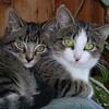 04 1225 Squawk Sweetie-Pie  Oct 5 2002