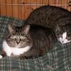 09 8234 Squawk SweetiePie Oct 20 2005