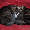 28 7652 Squeak Squirt Oct 26 2008