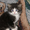 06 0888 Squirt  July 16 2002