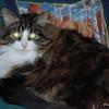 31 D0060 Shawnee Dec 7 2007