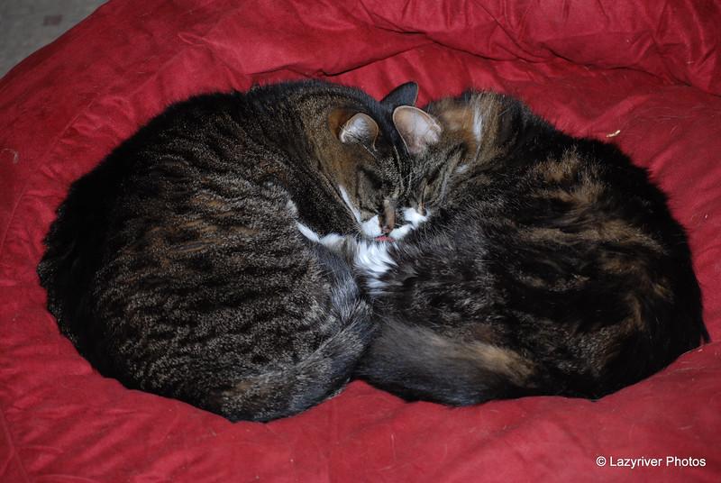 44 7652 Squeak Squirt Oct 26 2008