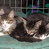11 0935 Snickers Rascal Squeak Squirt  July 23 2002