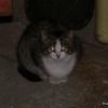 01 0015 Garage Kitty  Jan 29 2002
