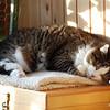 18 D0760 Sweetie-Pie Dec 25 2007