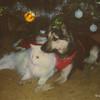 03 Boomer Spunky Dec 1991