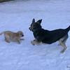 20 1904 Shayla Boomer  Mar 1 2003