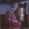 04 Boomer Duffer Dec 1991