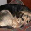 09 0004 Boomer  Jan 5 2002