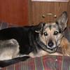 08 0002 Boomer  Jan 5  2002