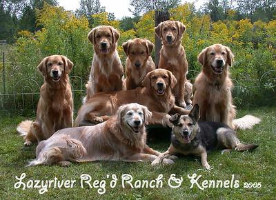 Lazyriver Dogs