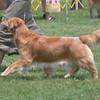 86 5330 Sasha  July 18 2004 crop
