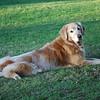 269 DSC_3849 Sasha Sept 5 2009